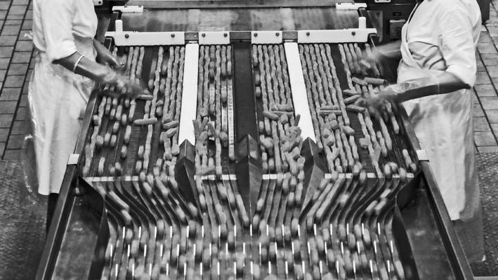 Fish sticks on a production line