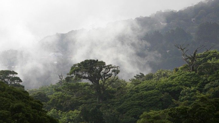 The treetops of a Costa Rican forest