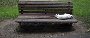 A cat lays flat on a bench at a park on the outskirts of Tokyo.