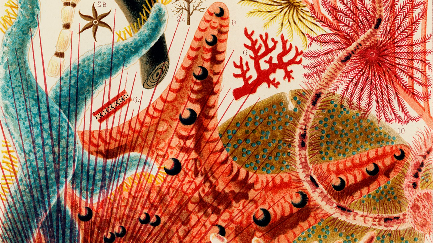 Illustration from The Great Barrier Reef of Australia