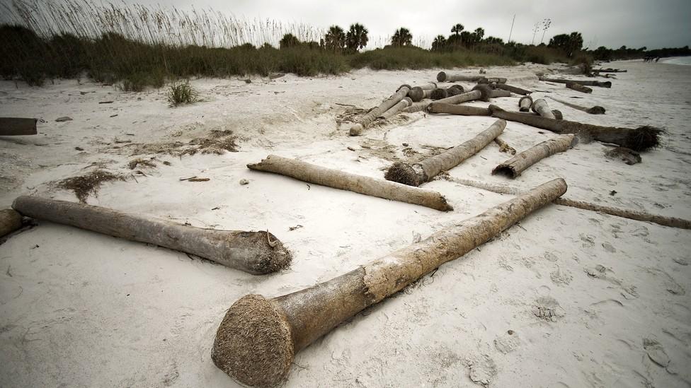 Dead palm trees on a beach