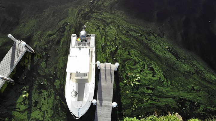 Green algae blooms on the Caloosahatchee River on July 10, 2018