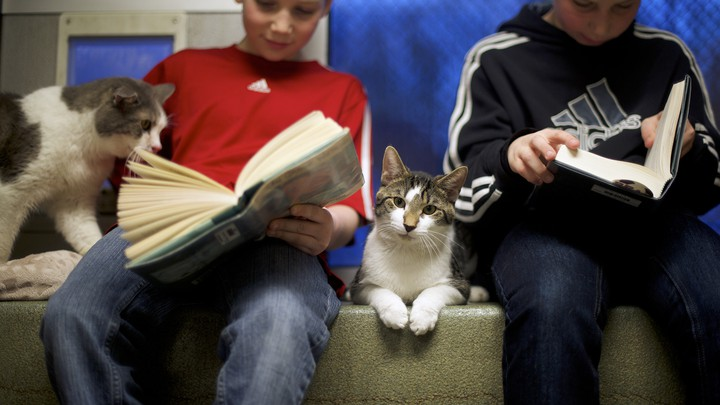 Two elementary-school aged boys read chapter books next to cats.