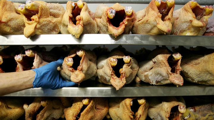 Chicken meat in a walk-in refrigerator