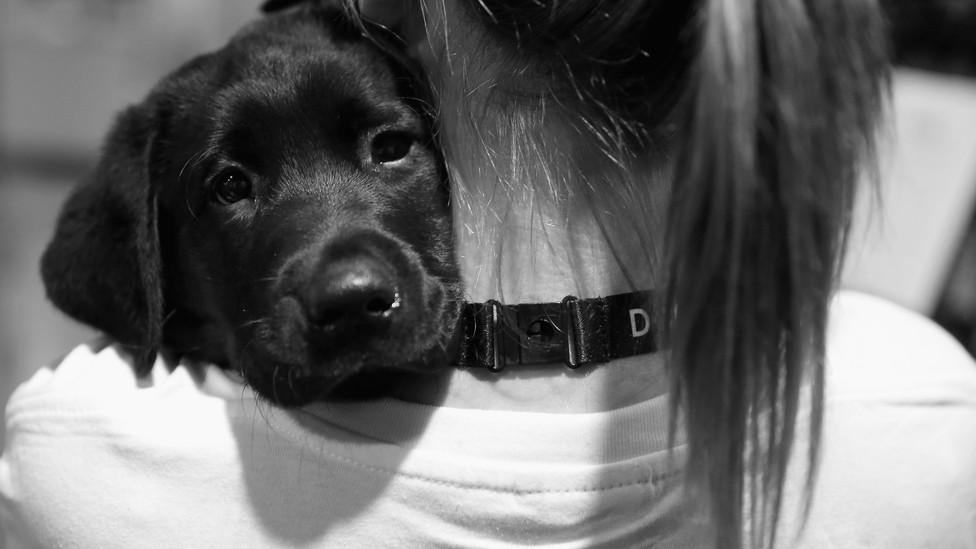 Illustration of dog with a coronavirus-shaped dog tag