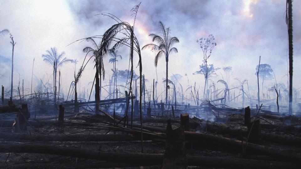 Burned trees amid a smoking landscaoe