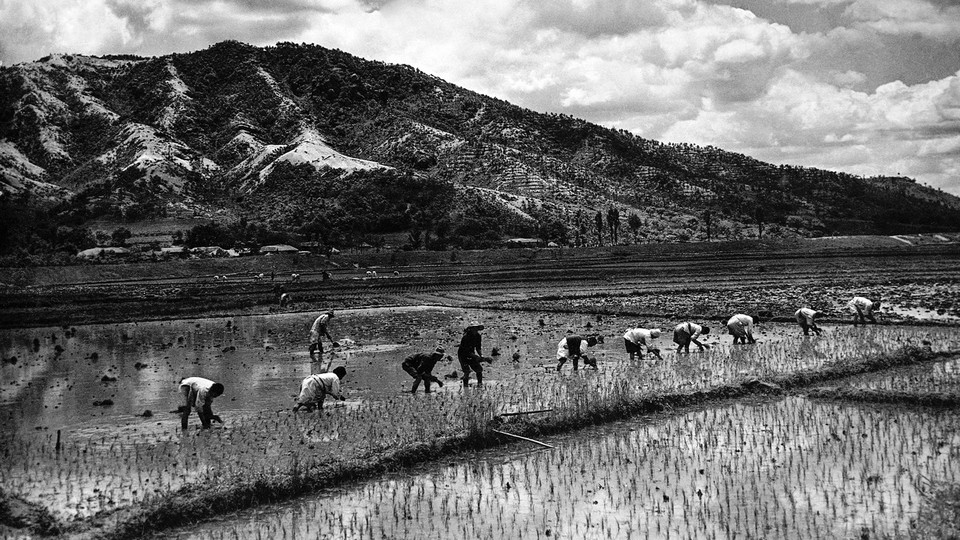 Workers in a rice paddy