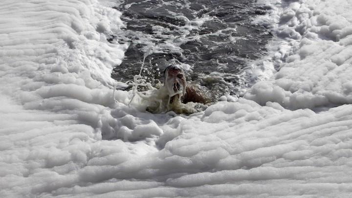 A white foam of chemical pollution blankets New Delhi's Yamuna river.