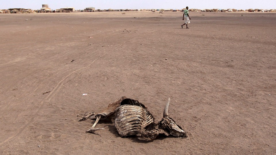 A man walks past a dead cow in a desert landscape.