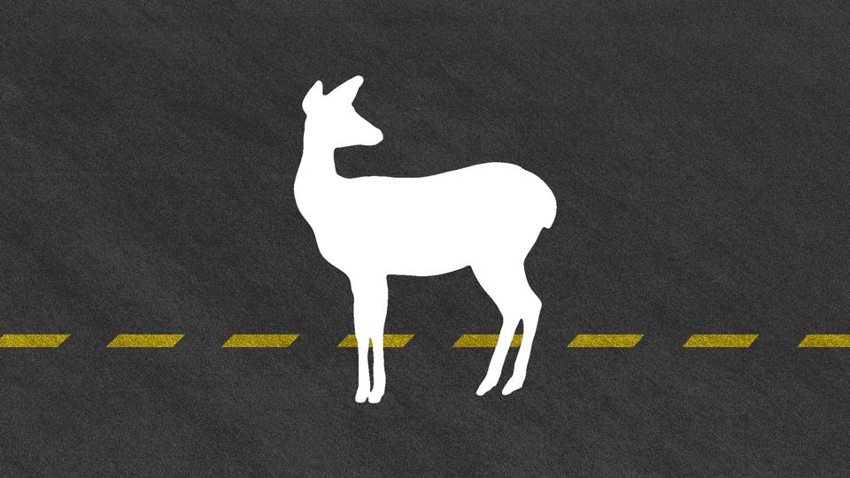 Silhouette of deer on road