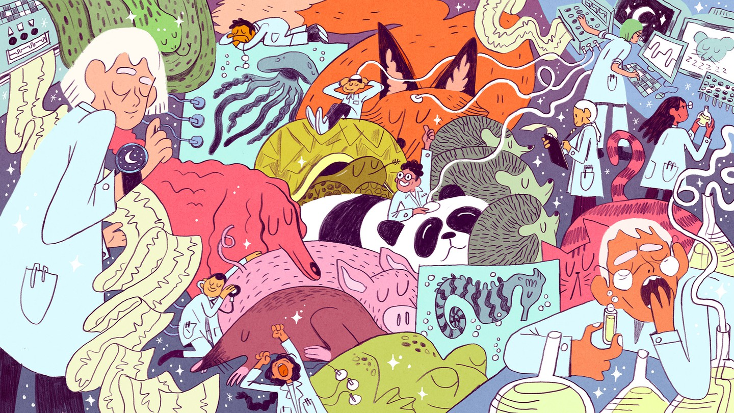An illustration of animals sleeping while researchers inspect them