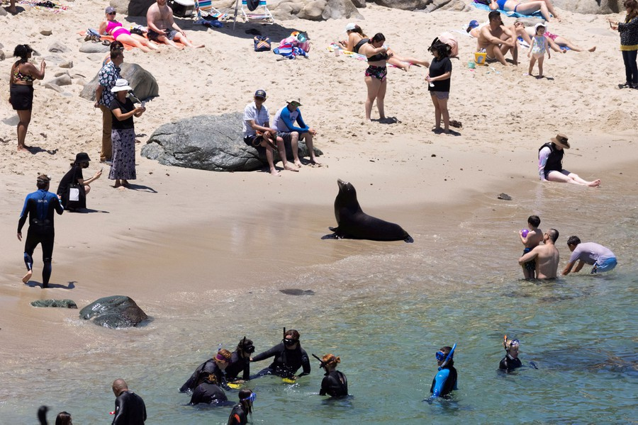 People enjoying a day at the beach look at a sea lion that rests on the shoreline among them.