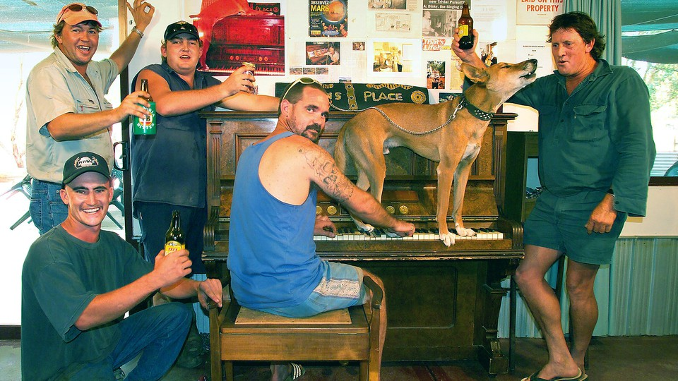A group of men raise their beers while a dingo stands on a piano and howls.