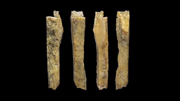 Four bones