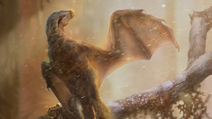 The dinosaur Ambopteryx stretches out a wing.