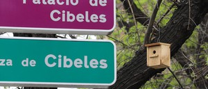 A birdhouse hangs from a tree branch near traffic signs in central Madrid.