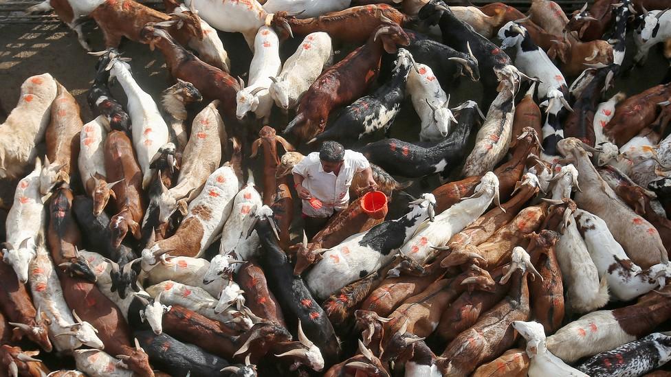 A livestock market in India