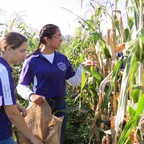 Two high-school students stand in a field inspecting corn stalks.
