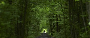 A woman walks with her greyhound dogs along a path in the Durand forest near the French border.