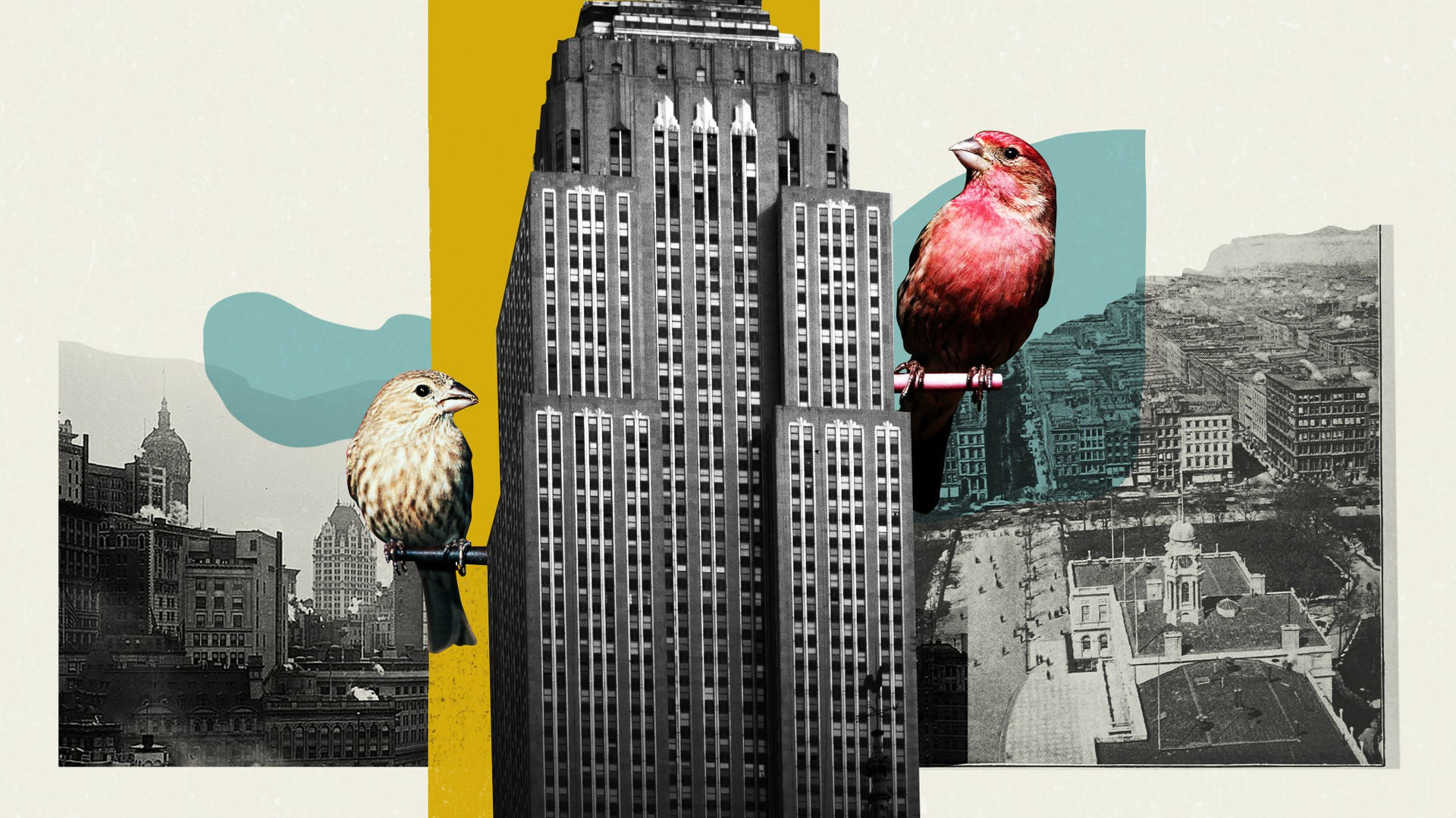 A collage of a male and a female house finch sitting on posts sticking out of a Manhattan high-rise
