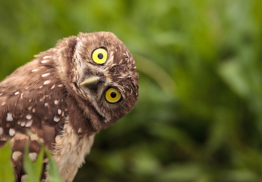 Photos: Superb Owl Sunday IV - The Atlantic