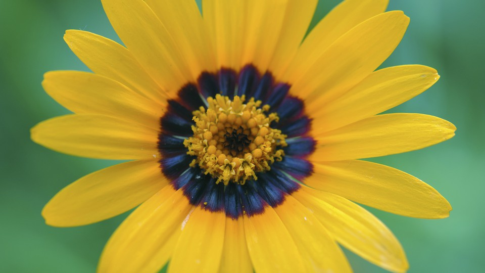 A flower with a blue halo