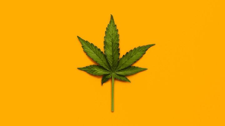 A marijuana leaf set against an orange background