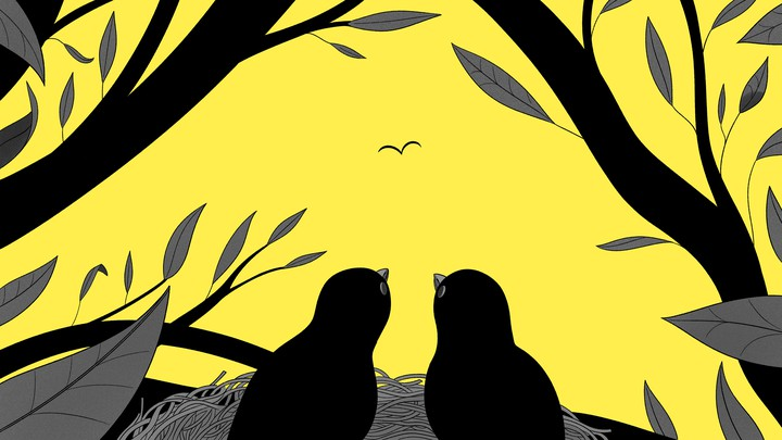 two birds looking out at tree branches