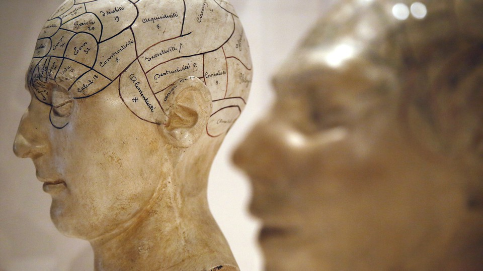 Models of human heads with areas of the brain mapped out