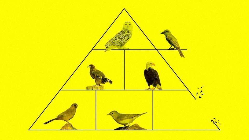 A pyramid of birds