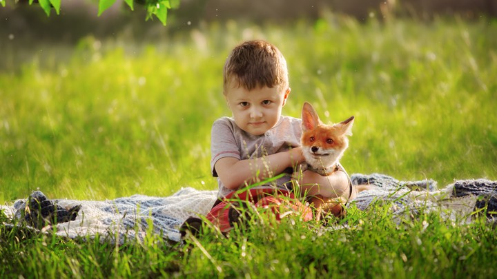 A toddler holds a fox in a grassy meadow