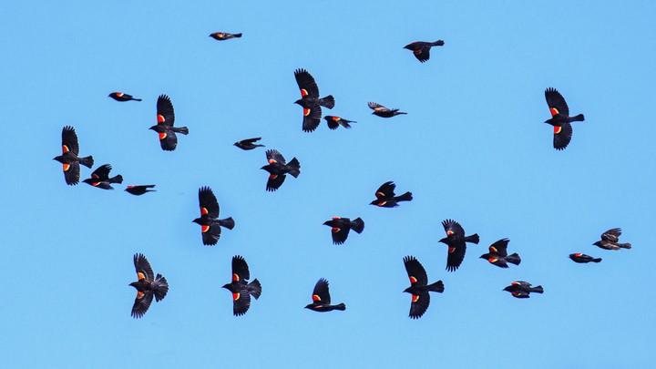 Birds flying agains a blue sky