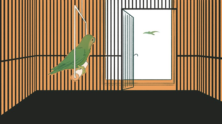 An illustration of a bird watching another bird fly away.