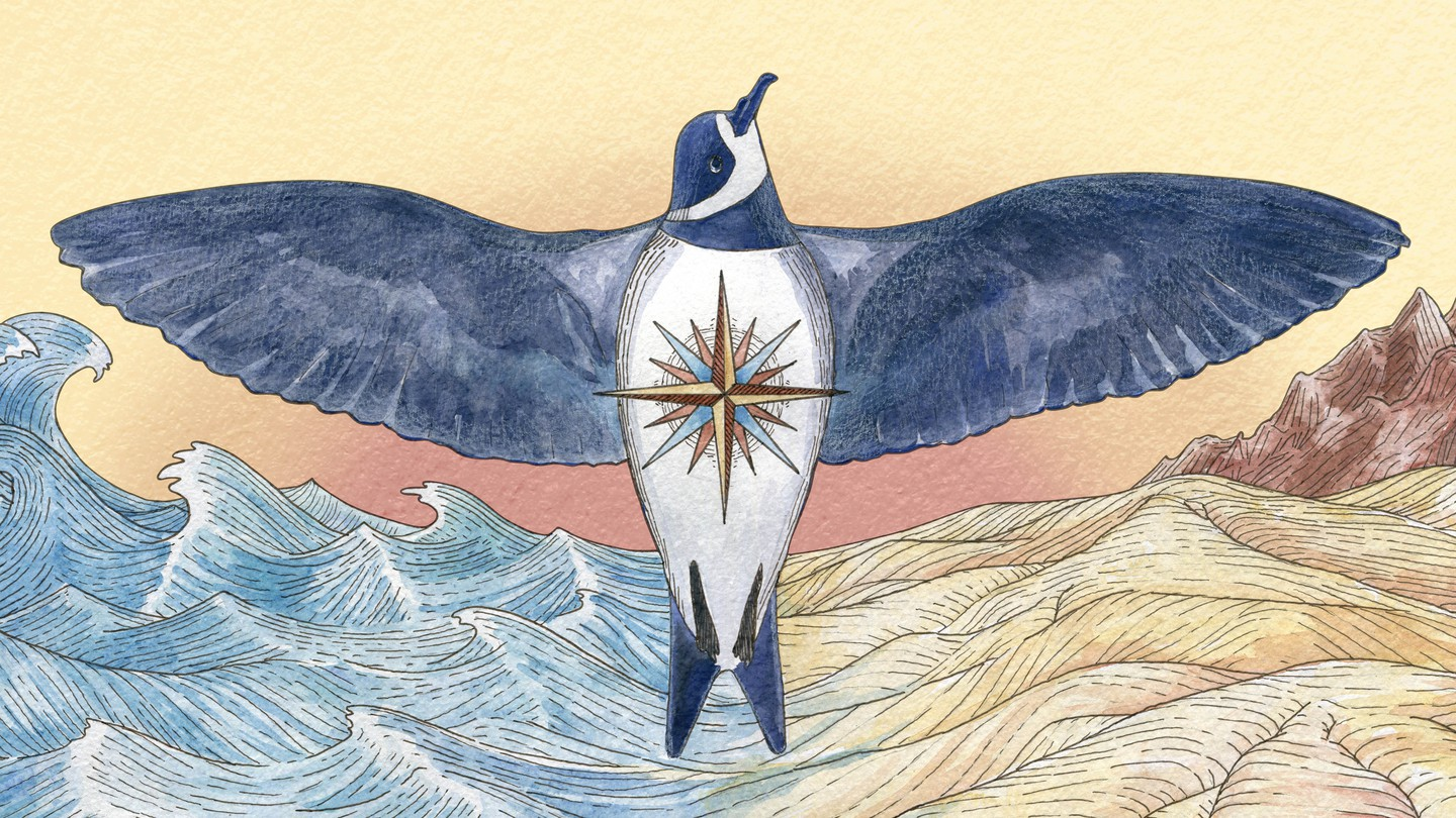 An illustration of a ringed storm petrel with its wings spread over both desert and sea