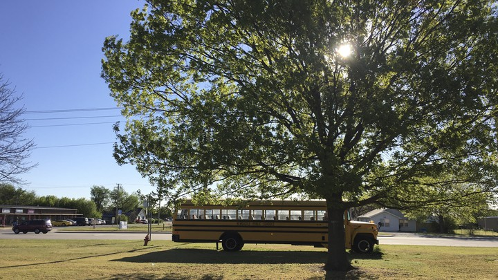 A school bus drives under a large tree.