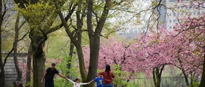 A family of four in New York City's Central Park