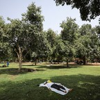 A man lies face-up on a blanket in the shade of a tree in a public park.