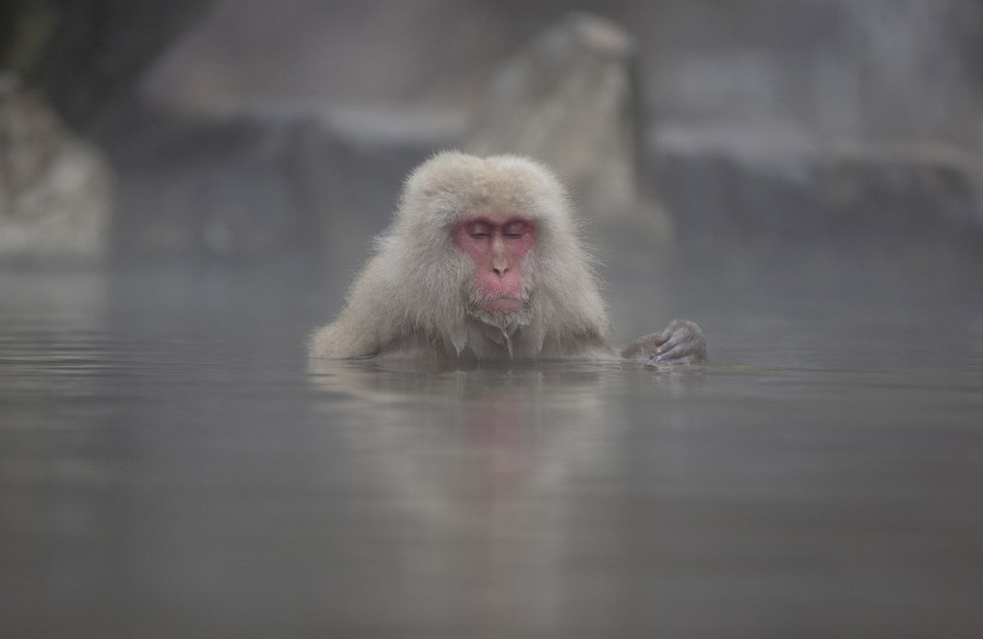 A contented-looking monkey sits shoulder-deep in the water of a hot spring.