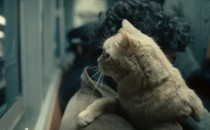 What S Really Going On With The Cat In Inside Llewyn Davis A Theory The Atlantic