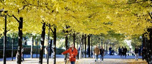 A man pushes his bike under trees with yellow leaves.