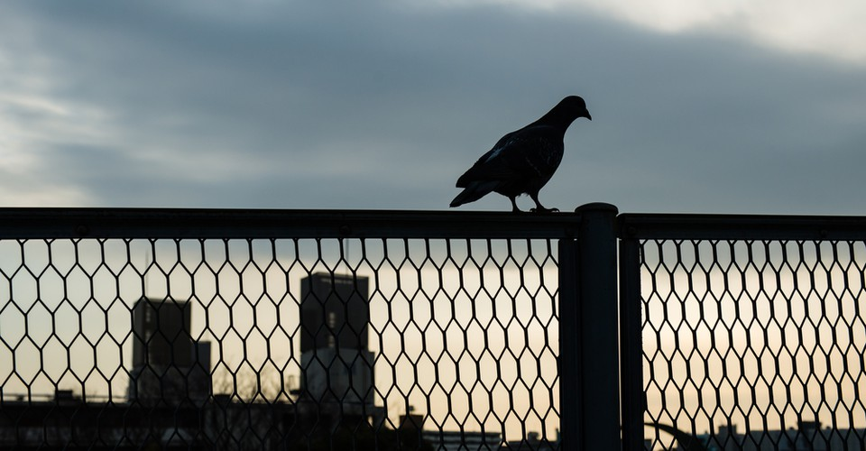 The Majesty of Pigeons Unseen City the Discreet Charm of Snails /& Other Wonders of the Urban Wilderness