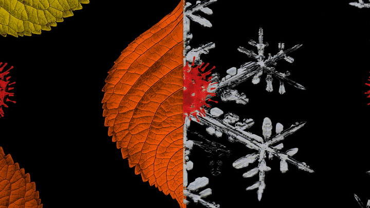An illustration of an autumn leaf and a snowflake with coronavirus cells