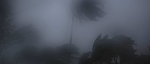 Palm trees blow in the wind and rain