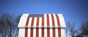 A cow stands in front of a barn painted with a U.S. flag