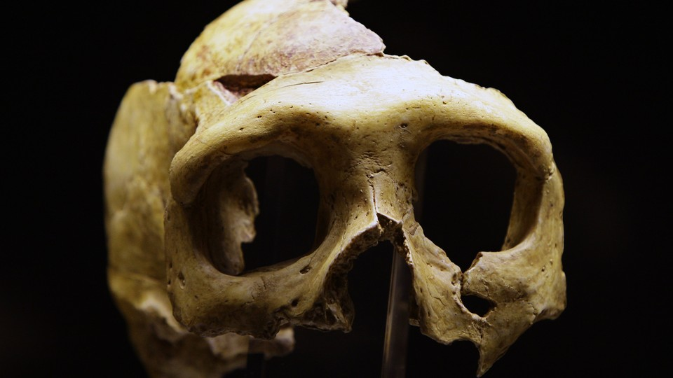 A replica of a Neanderthal skull