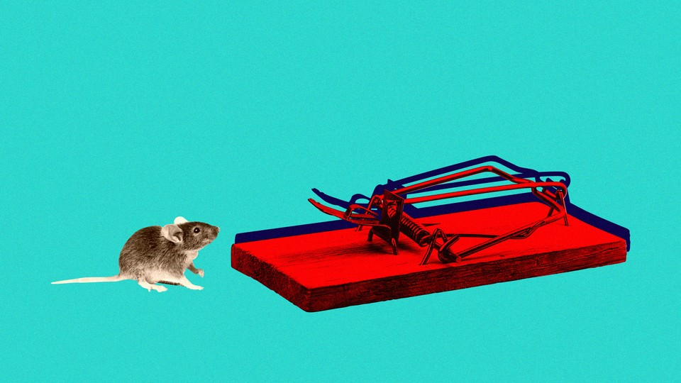 A mouse stares at a mousetrap.