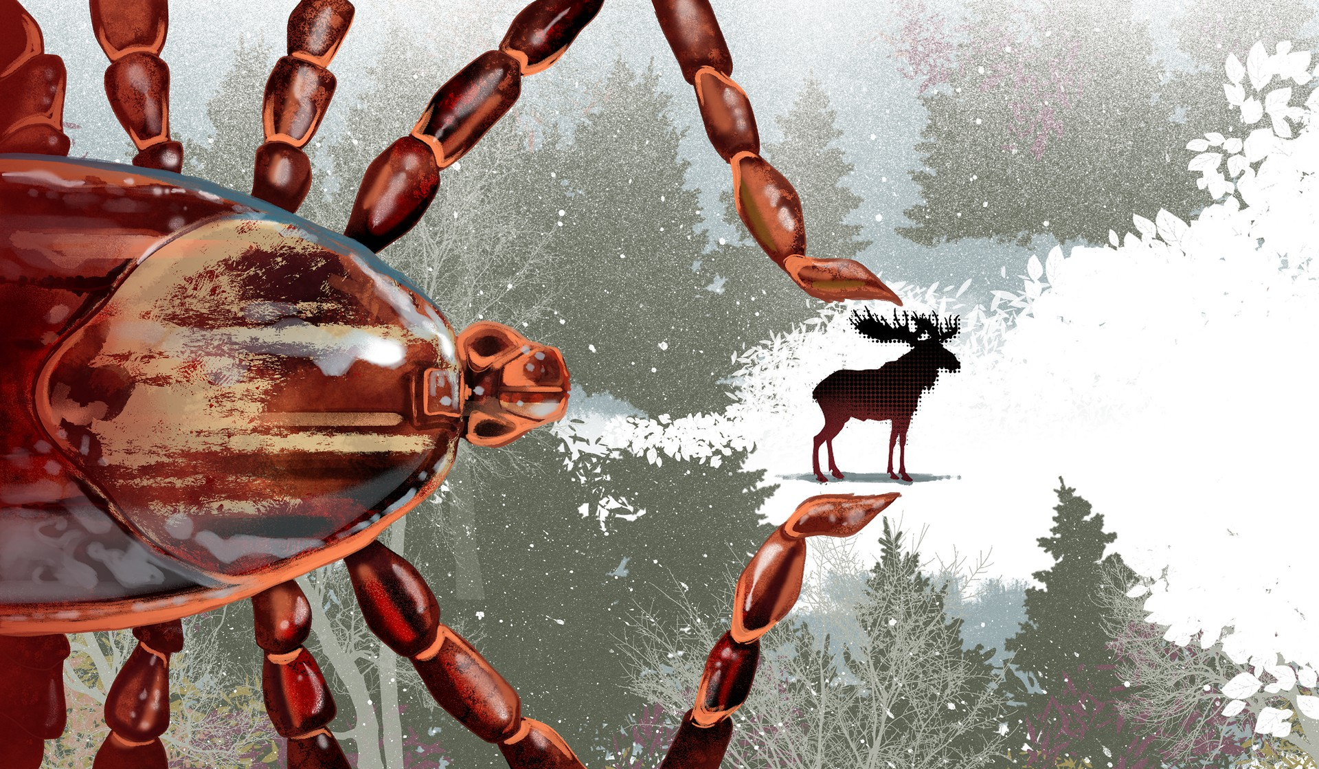 The Ticks That Can Take Down An 800 Pound Moose The Atlantic This winter have the time of your life celebrating christmas and engaging in games with your christmas teams. pound moose
