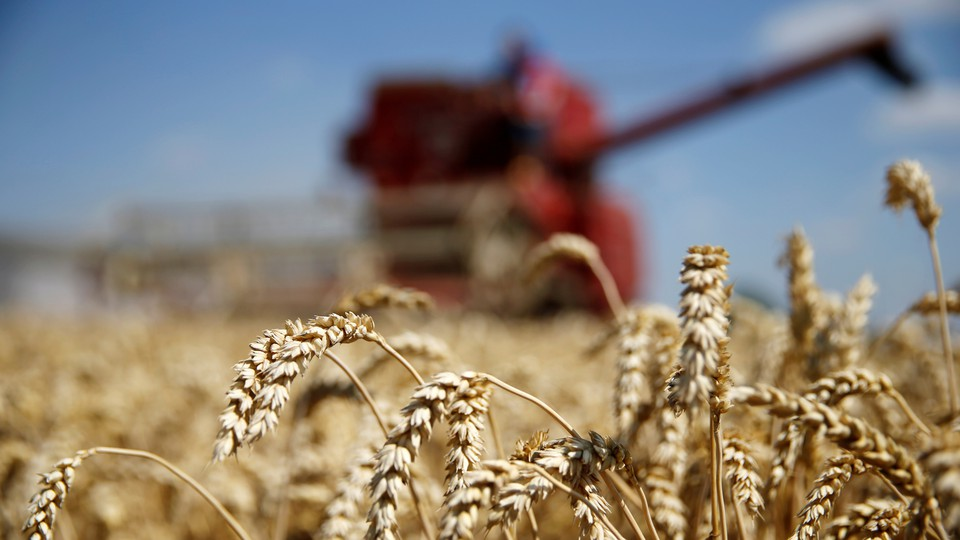 A field of wheat with a combine harvester in the background
