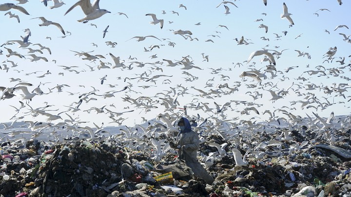 A woman sifts through garbage, as birds circle overhead.