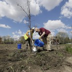 Two men plant a young tree in a lot in Detroit.